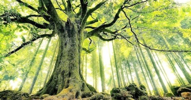 simbología de los árboles, árboles mágicos