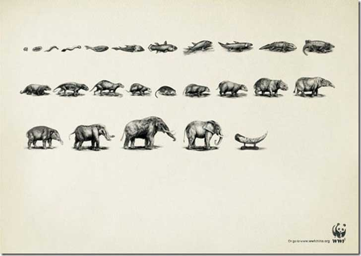 WWF-Ads-Evolution-Elephant
