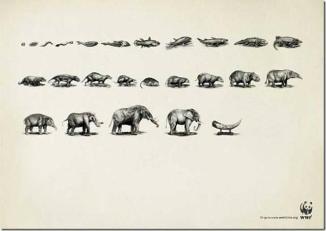 WWF-Ads-Evolution-Elephant