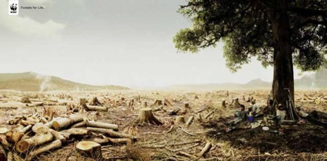 WWF-Ads-Tree